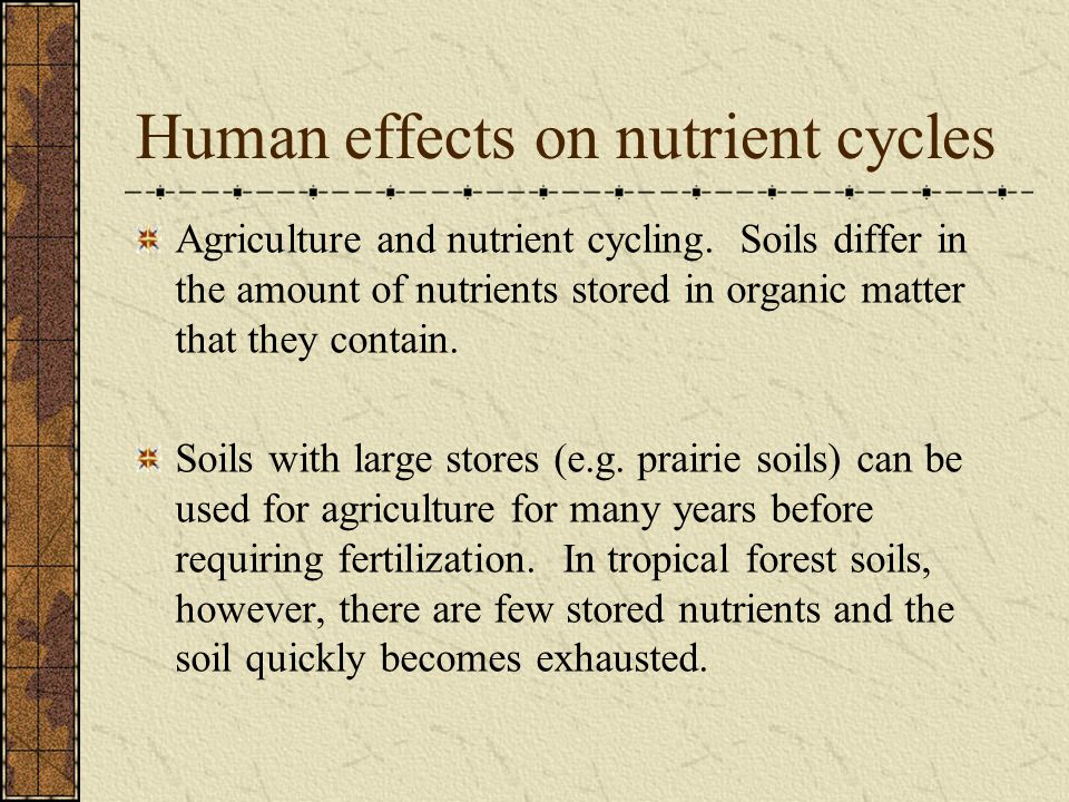 Human effects on nutrient cycles Agriculture and nutrient cycling. Soils differ in the amount of nutrients stored in organic matter that they contain.