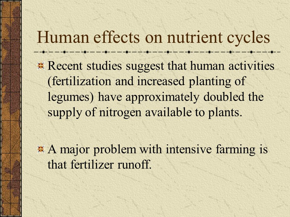 Human effects on nutrient cycles Recent studies suggest that human activities (fertilization and increased planting of legumes) have approximately doubled the supply of nitrogen available to plants.