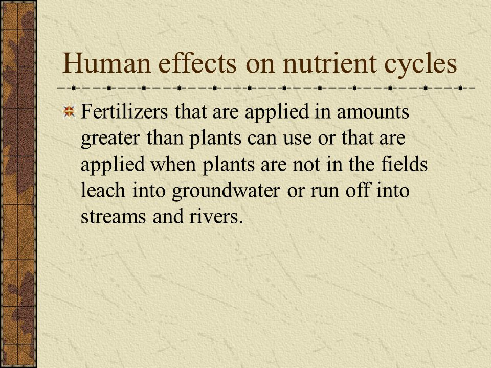 Human effects on nutrient cycles Fertilizers that are applied in amounts greater than plants can use or that are applied when plants are not in the fields leach into groundwater or run off into streams and rivers.