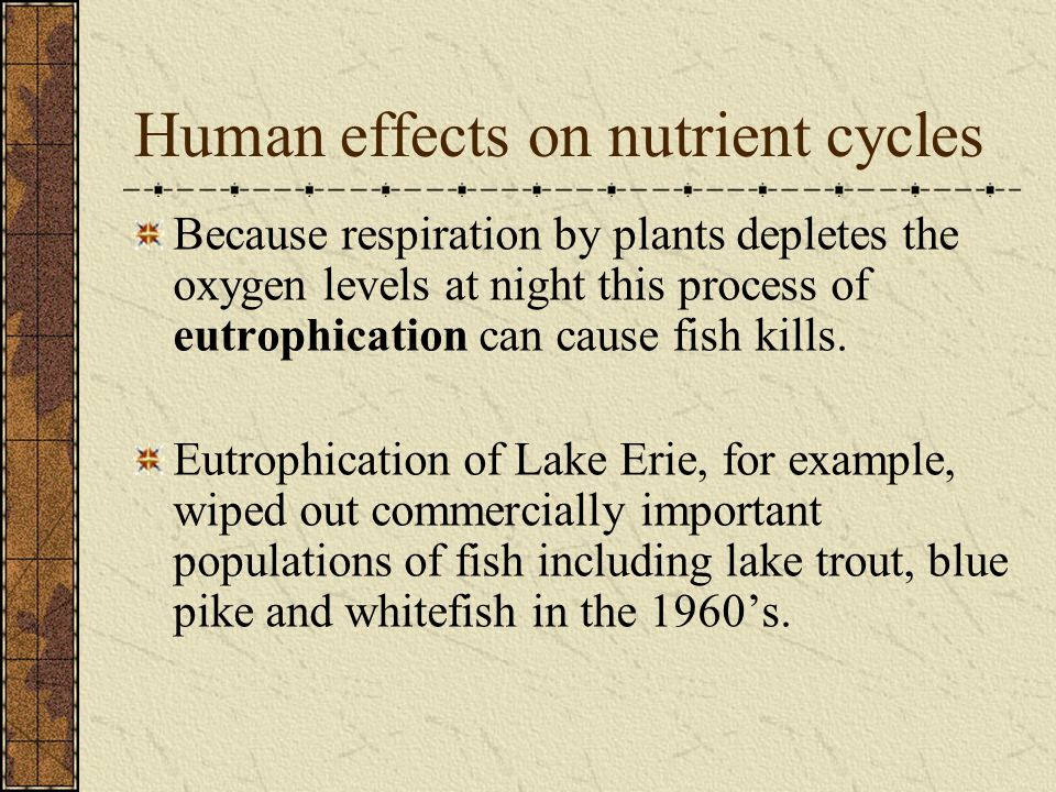 Human effects on nutrient cycles Because respiration by plants depletes the oxygen levels at night this process of eutrophication can cause fish kills