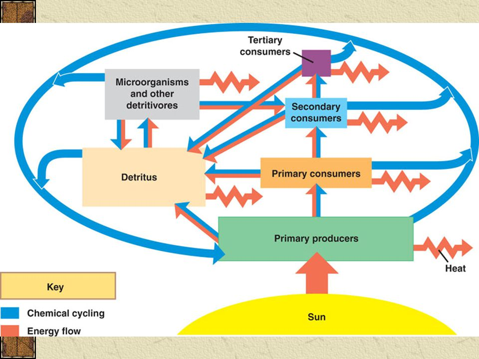 General Structure of Nutrient Cycles Nutrients can move from one reservoir to another by a variety of processes.