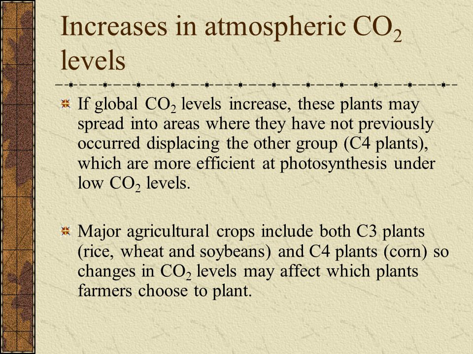 Increases in atmospheric CO 2 levels If global CO 2 levels increase, these plants may spread into areas where they have not previously occurred displacing the other group (C4 plants), which are more efficient at photosynthesis under low CO 2 levels.