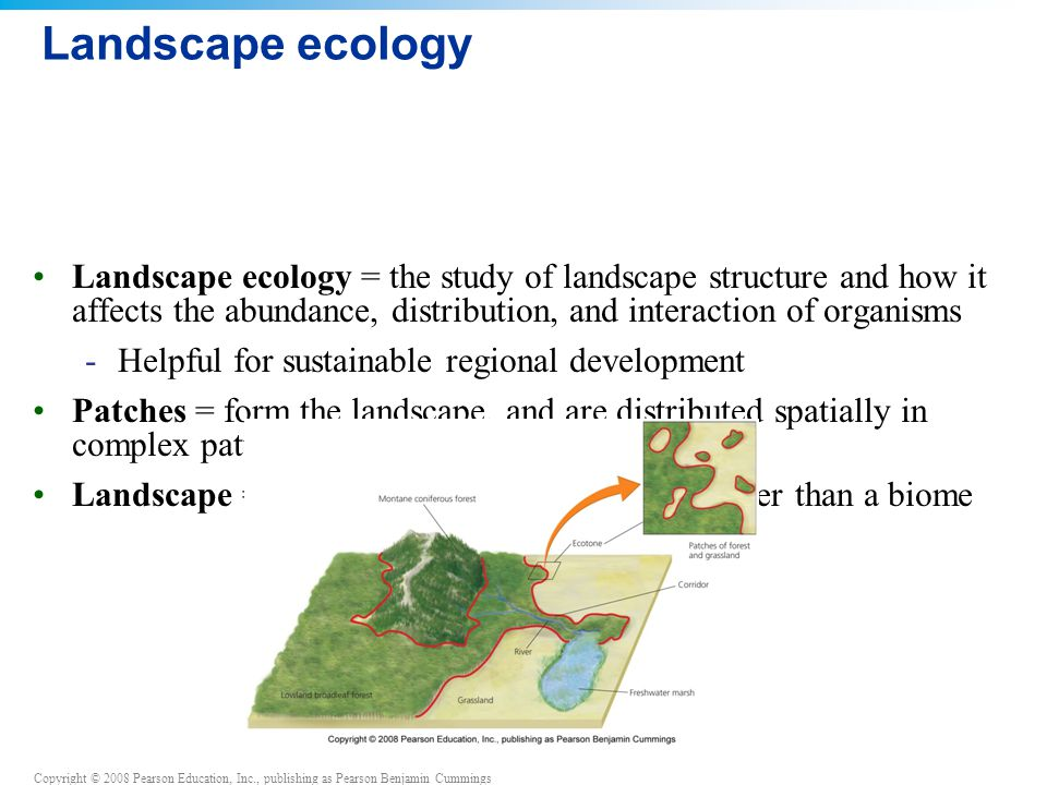 Copyright © 2008 Pearson Education, Inc., publishing as Pearson Benjamin Cummings Landscape ecology = the study of landscape structure and how it affects the abundance, distribution, and interaction of organisms -Helpful for sustainable regional development Patches = form the landscape, and are distributed spatially in complex patterns (a mosaic) Landscape = larger than an ecosystem and smaller than a biome Landscape ecology