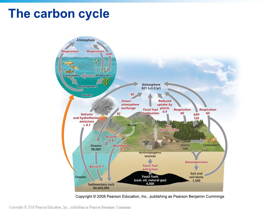 Copyright © 2008 Pearson Education, Inc., publishing as Pearson Benjamin Cummings The carbon cycle