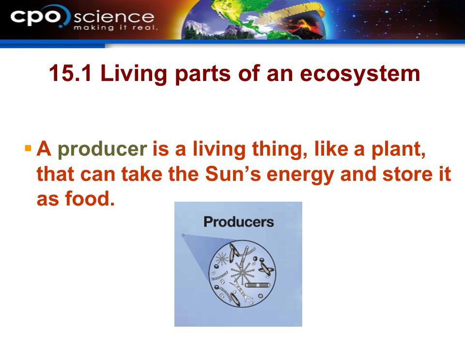 15.1 Living parts of an ecosystem  A producer is a living thing, like a plant, that can take the Sun's energy and store it as food.