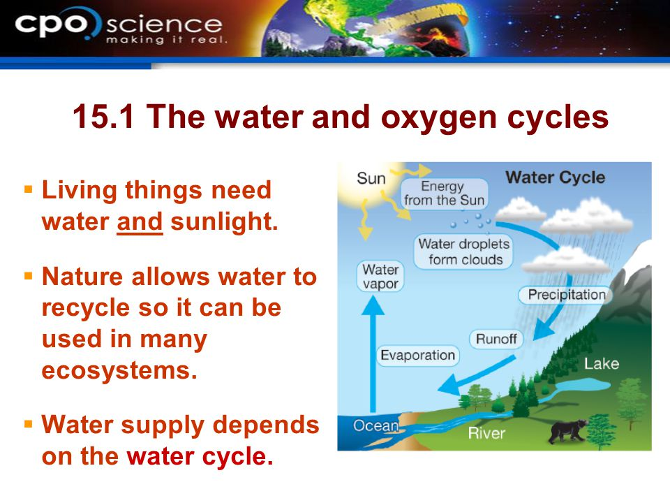 15.1 The water and oxygen cycles  Living things need water and sunlight.