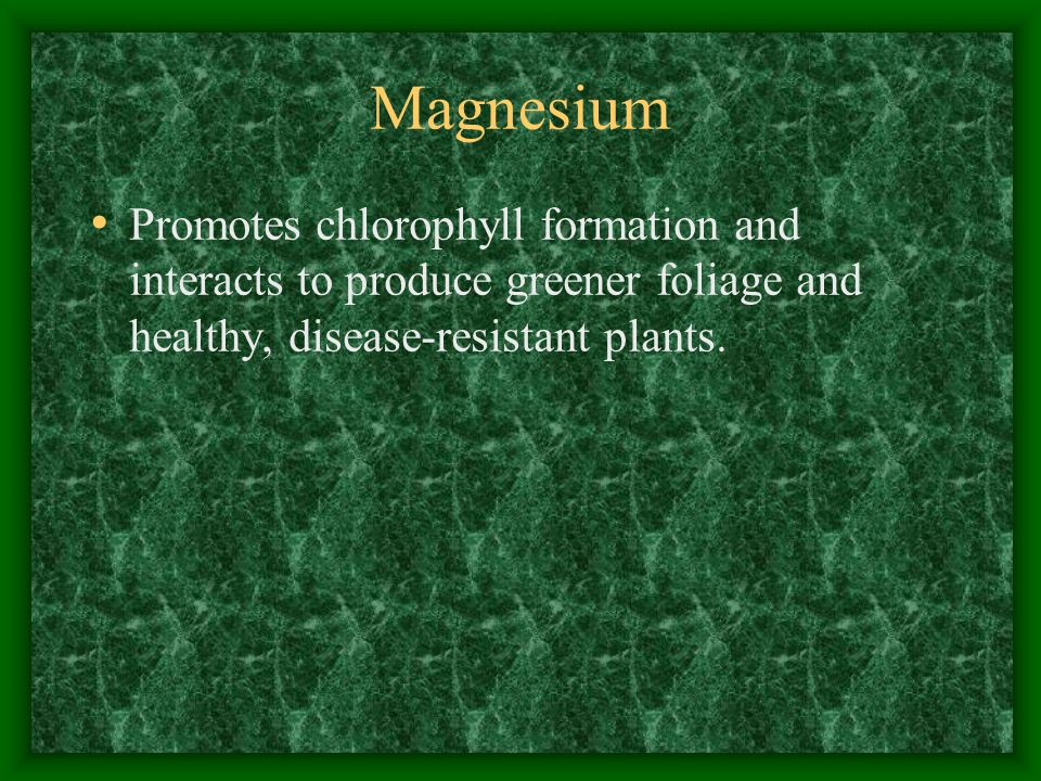 Magnesium Promotes chlorophyll formation and interacts to produce greener foliage and healthy, disease-resistant plants.