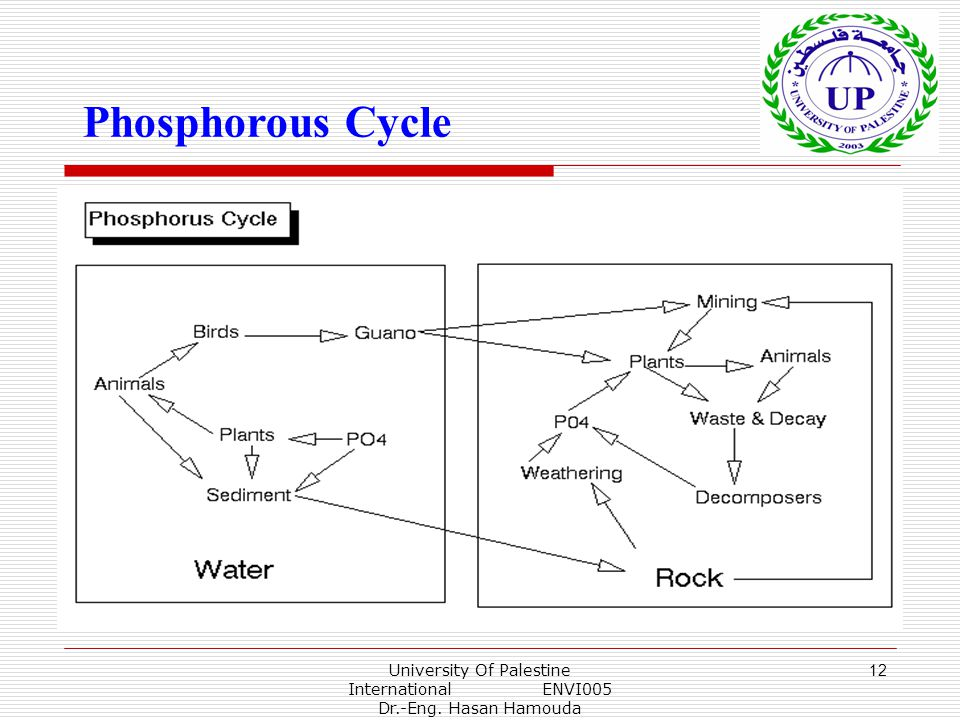 University Of Palestine International ENVI005 Dr.-Eng. Hasan Hamouda 12 Phosphorous Cycle