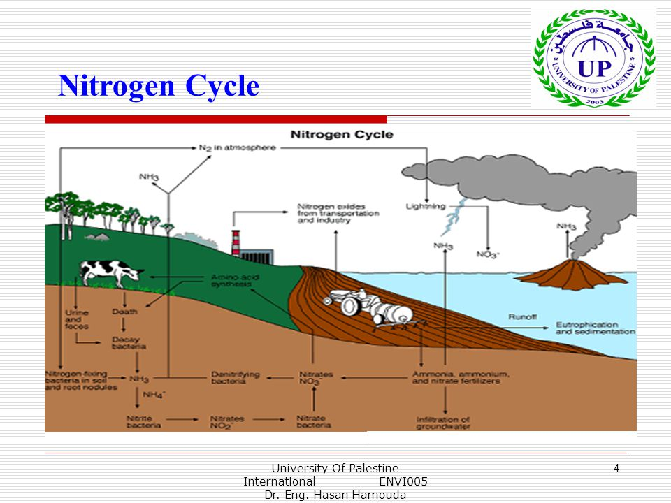 University Of Palestine International ENVI005 Dr.-Eng. Hasan Hamouda 4 Nitrogen Cycle