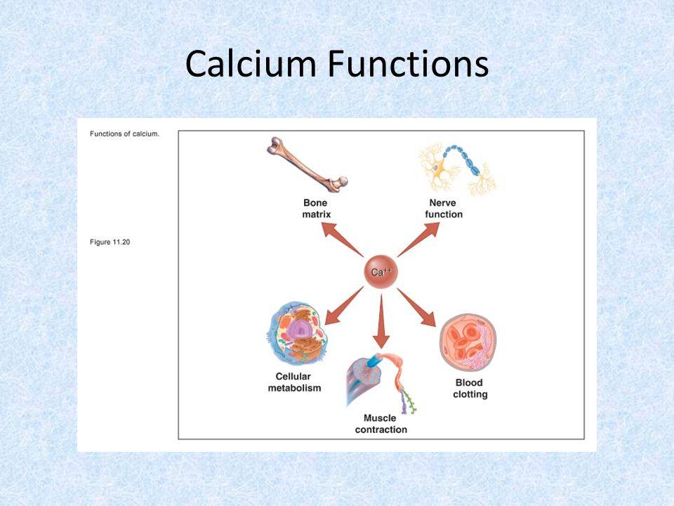 Calcium Functions