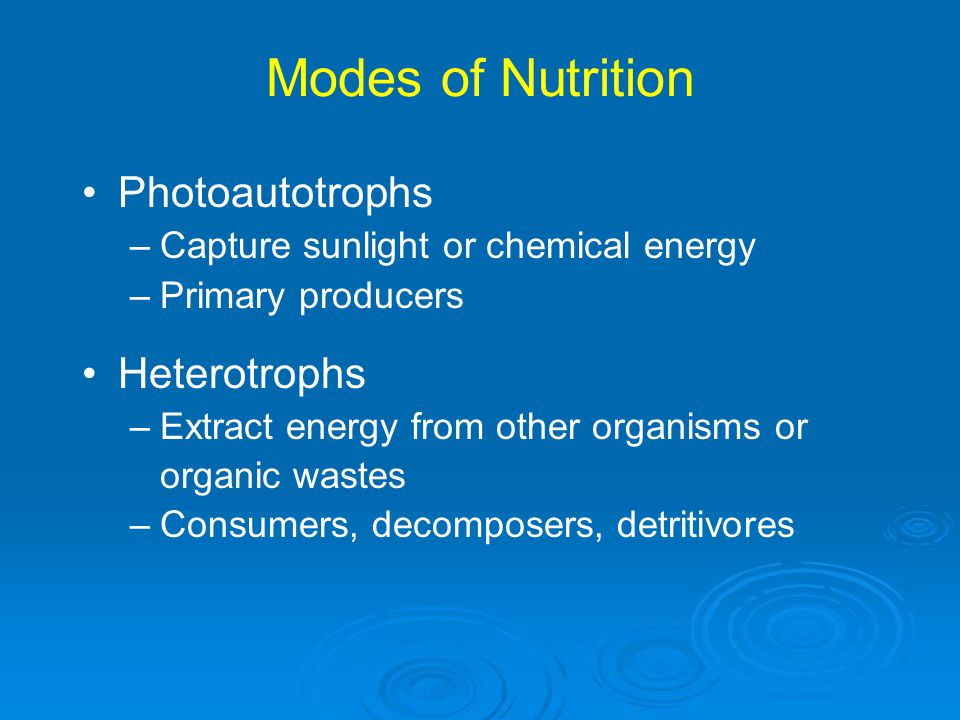 Phosphorus Cycle Phosphorus cycle