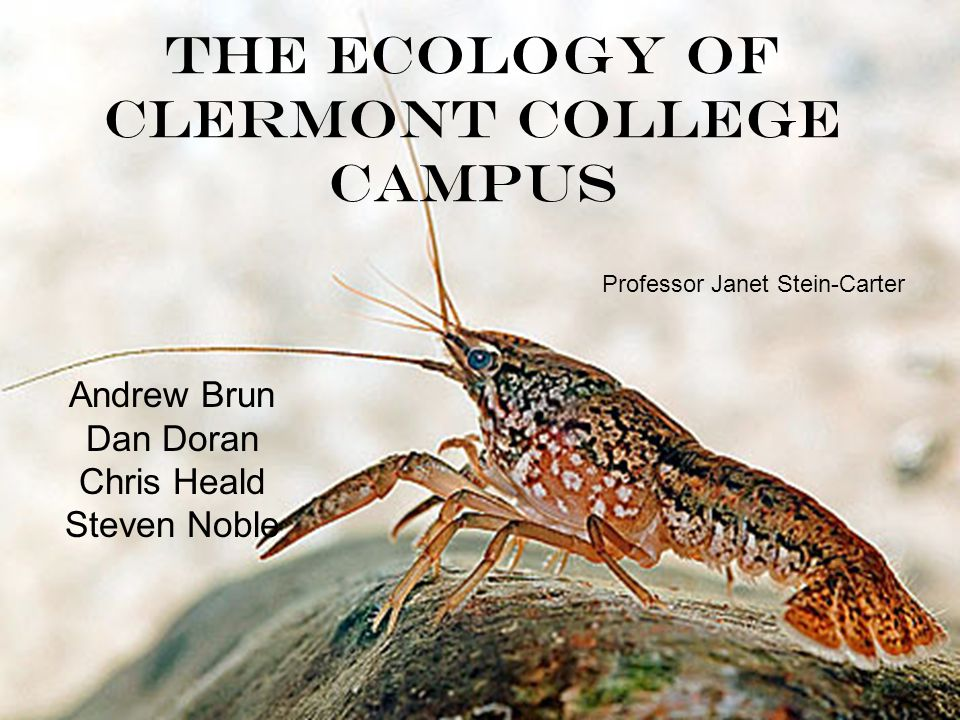 The Ecology of Clermont College Campus Andrew Brun Dan Doran Chris Heald Steven Noble Professor Janet Stein-Carter