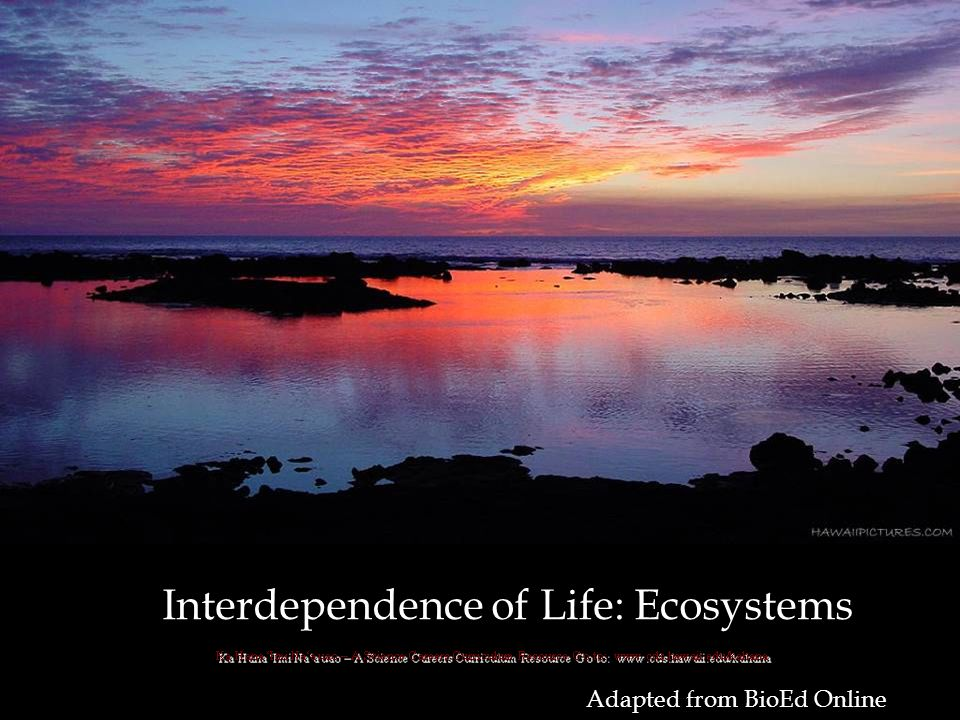 Adapted from BioEd Online Interdependence of Life: Ecosystems