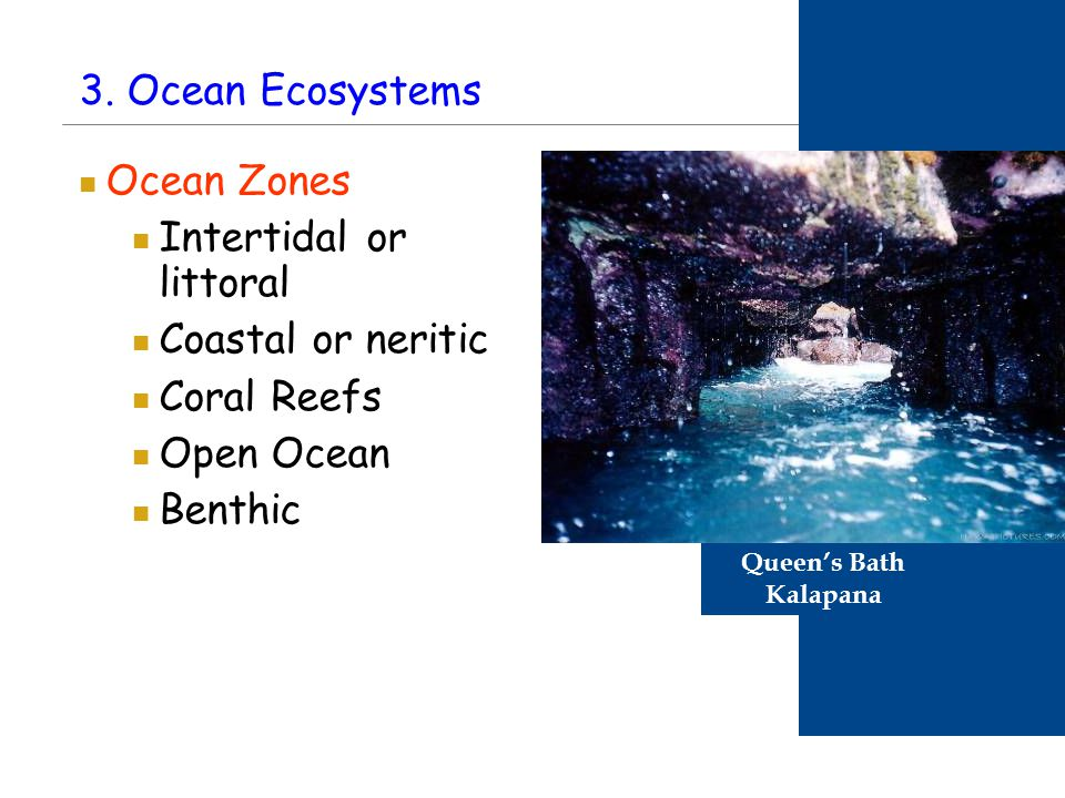 PART 2: Biogeochemical Cycles Coming up next … Cycling of materials between the environment and organisms Chemical and biological processes Examples Water cycle Nitrogen cycle Phosphorus cycle Carbon cycle Plants obtain nitrogen from nitrogen-fixing bacteria and pass it to other organisms through the food chain.