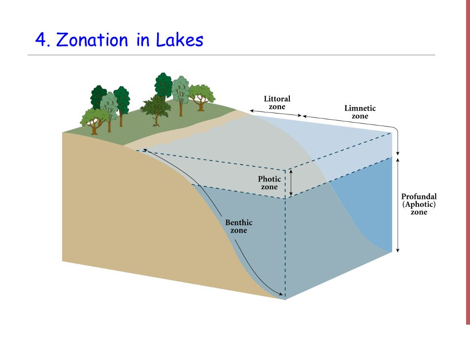 5. Zonation in a Marine Environment