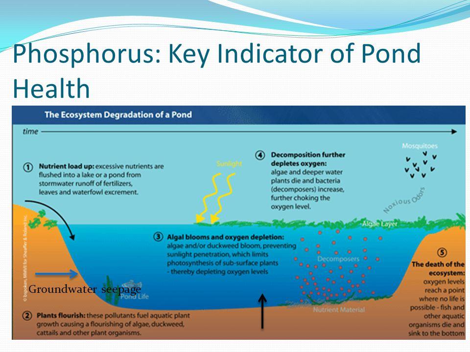 Phosphorus: Key Indicator of Pond Health Groundwater seepage