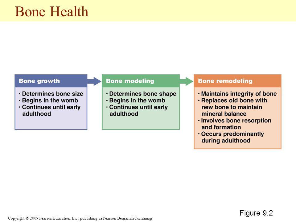 Copyright © 2009 Pearson Education, Inc., publishing as Pearson Benjamin Cummings Bone Health Figure 9.2