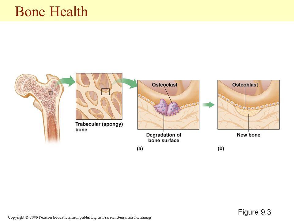 Copyright © 2009 Pearson Education, Inc., publishing as Pearson Benjamin Cummings Bone Health Figure 9.3