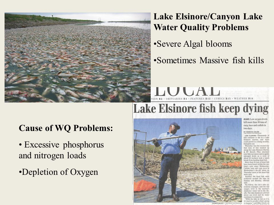 Lake Elsinore/Canyon Lake Water Quality Problems Severe Algal blooms Sometimes Massive fish kills Cause of WQ Problems: Excessive phosphorus and nitrogen loads Depletion of Oxygen