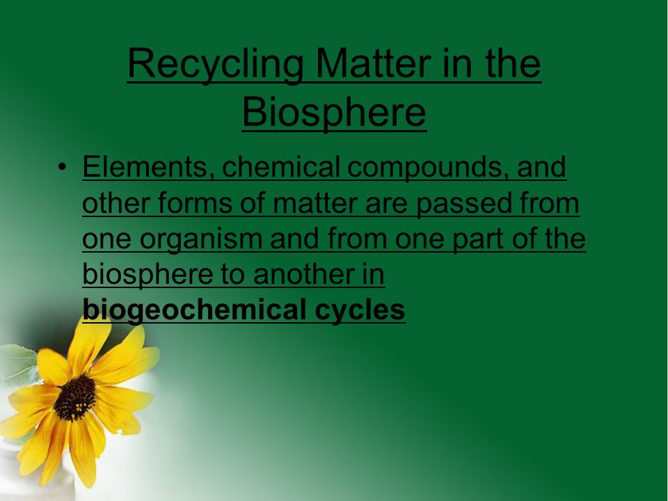 What is Biomass? Biomass is the total amount of living tissue within a given trophic level A biomass pyramid can show you much food is available to ea