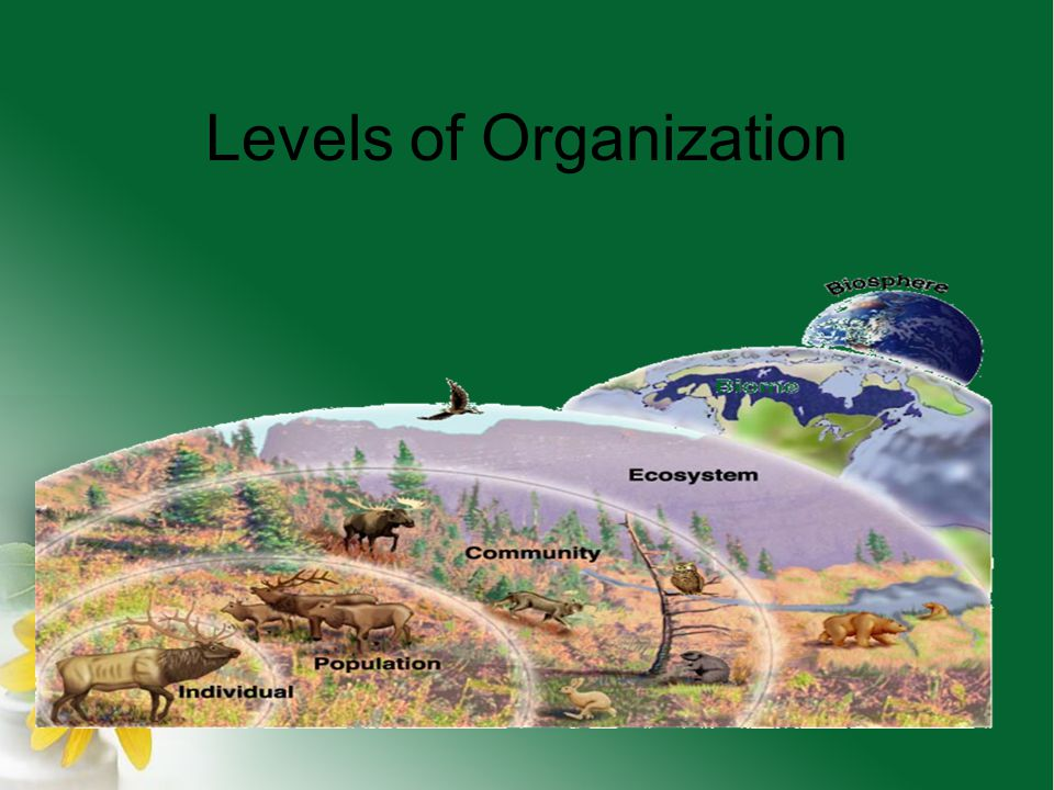 Levels of Organization Ecologists recognize there is a hierarchy of organization in the environment: biosphere, biome ecosystem, community, population