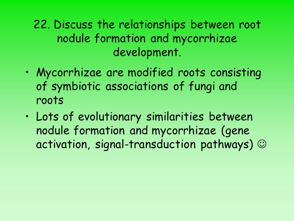 22. Discuss the relationships between root nodule formation and mycorrhizae development. Mycorrhizae are modified roots consisting of symbiotic associ