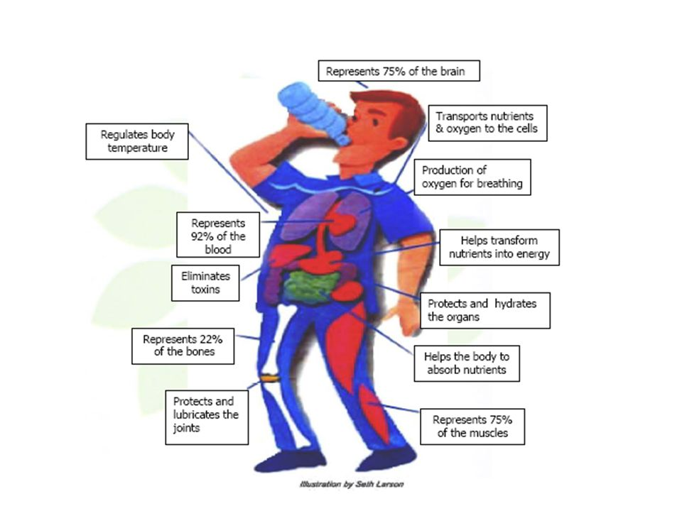 Water Water is your body's most important nutrient, is involved in every bodily function, and makes up 70- 75% of your total body weight. Water helps