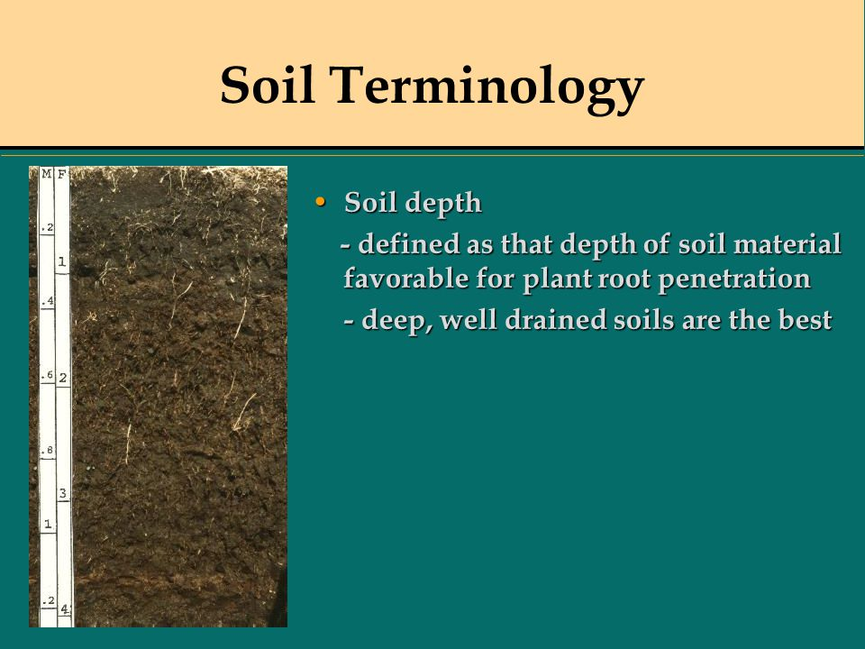 Soil Terminology Soil depth Soil depth - defined as that depth of soil material favorable for plant rootpenetration - defined as that depth of soil ma
