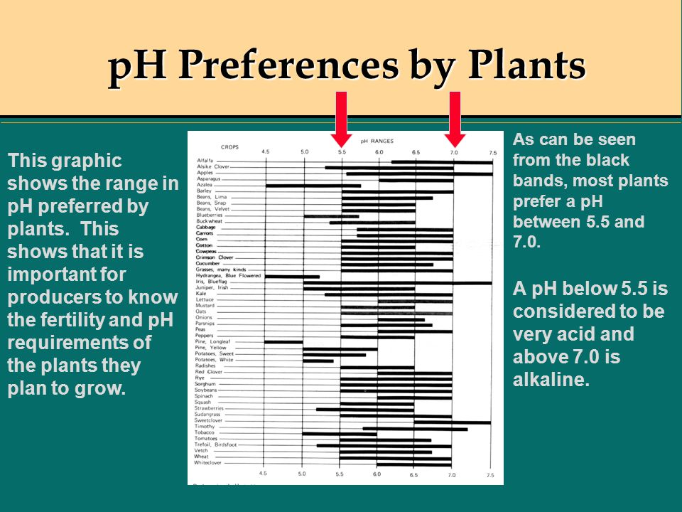 pH Preferences by Plants This graphic shows the range in pH preferred by plants. This shows that it is important for producers to know the fertility a