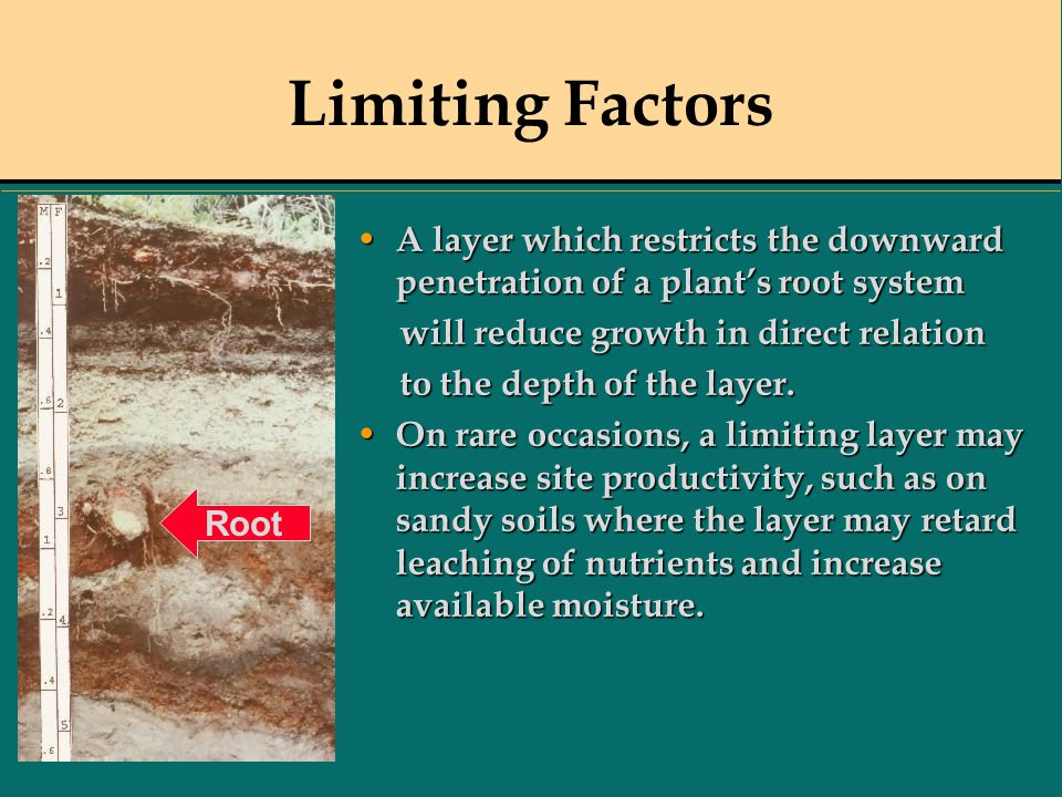 Limiting Factors A layer which restricts the downward penetration of a plant's root system A layer which restricts the downward penetration of a plant