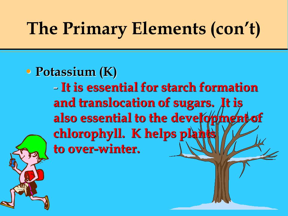 Potassium (K) - It is essential for starch formation and translocation of sugars. It is also essential to the development of chlorophyll. K helps plan