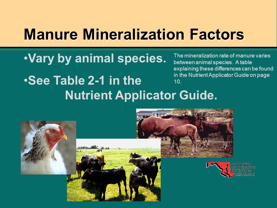 Manure Mineralization Factors Vary by animal species. See Table 2-1 in the Nutrient Applicator Guide. The mineralization rate of manure varies between