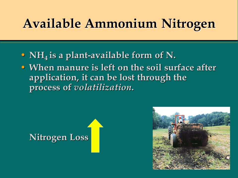 NH 4 is a plant-available form of N. NH 4 is a plant-available form of N. When manure is left on the soil surface after application, it can be lost th