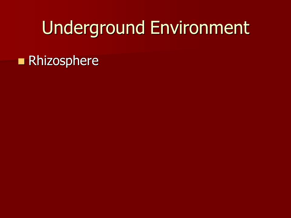 Underground Environment Rhizosphere Rhizosphere