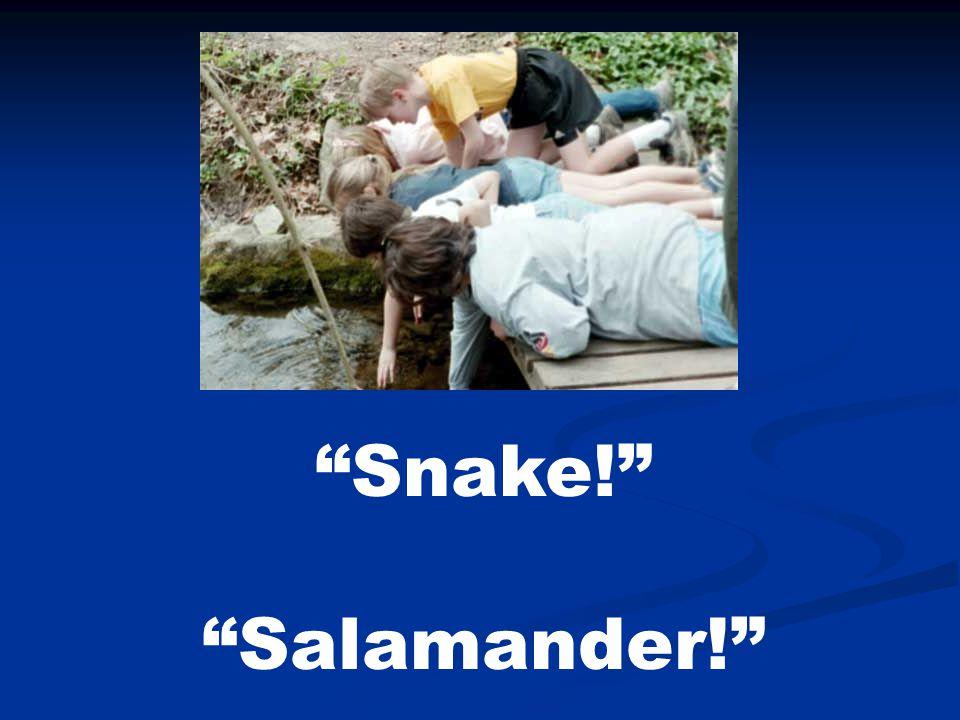 """Snake!"" ""Salamander!"""