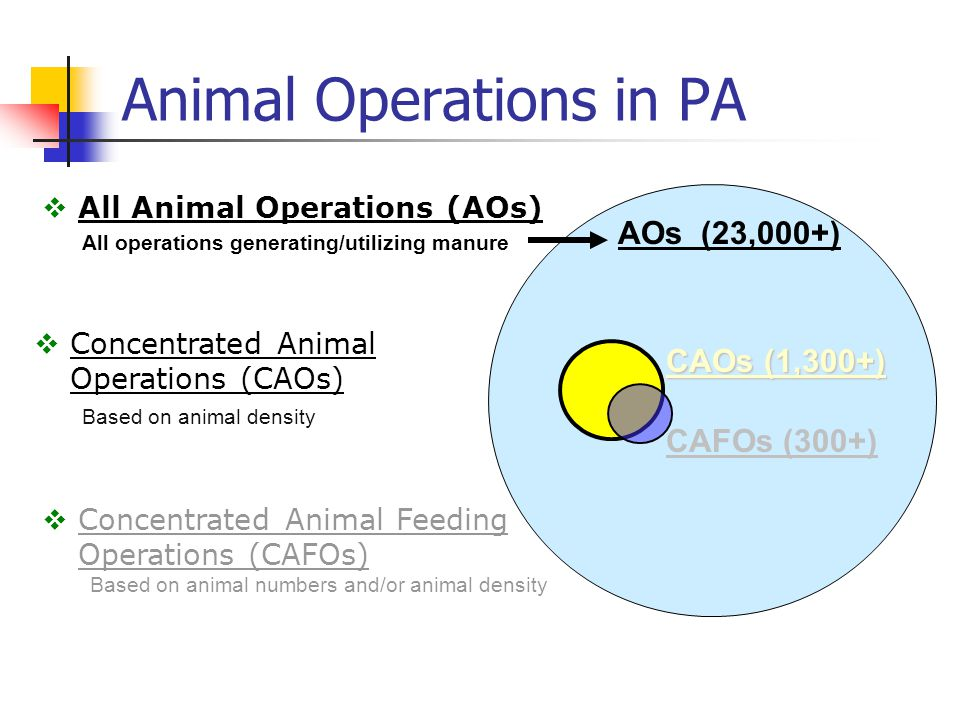 Animal Operations in PA CAFOs (300+)  All Animal Operations (AOs) All operations generating/utilizing manure  Concentrated Animal Operations (CAOs) Based on animal density  Concentrated Animal Feeding Operations (CAFOs) Based on animal numbers and/or animal density CAOs (1,300+) AOs (23,000+)