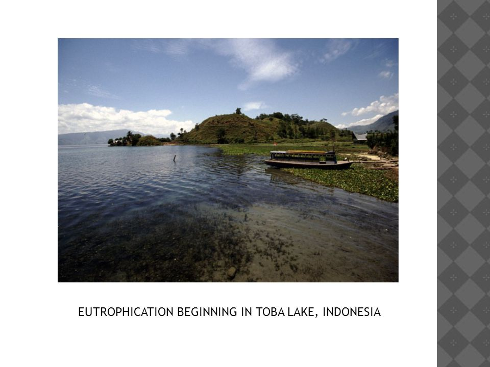 EUTROPHICATION BEGINNING IN TOBA LAKE, INDONESIA
