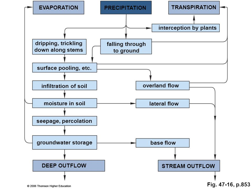EVAPORATION PRECIPITATION TRANSPIRATION dripping, trickling down along stems falling through to ground interception by plants surface pooling, etc.