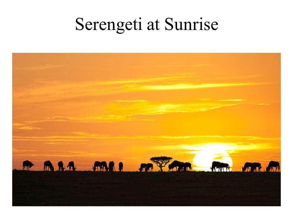Serengeti at Sunrise