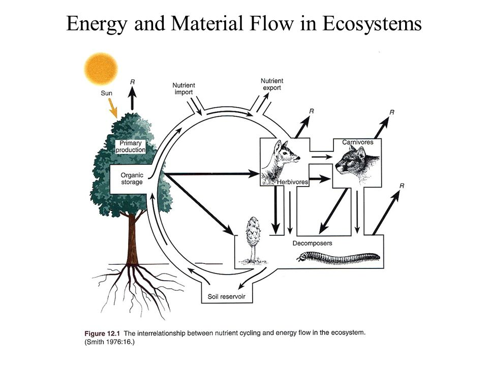 Energy and Material Flow in Ecosystems