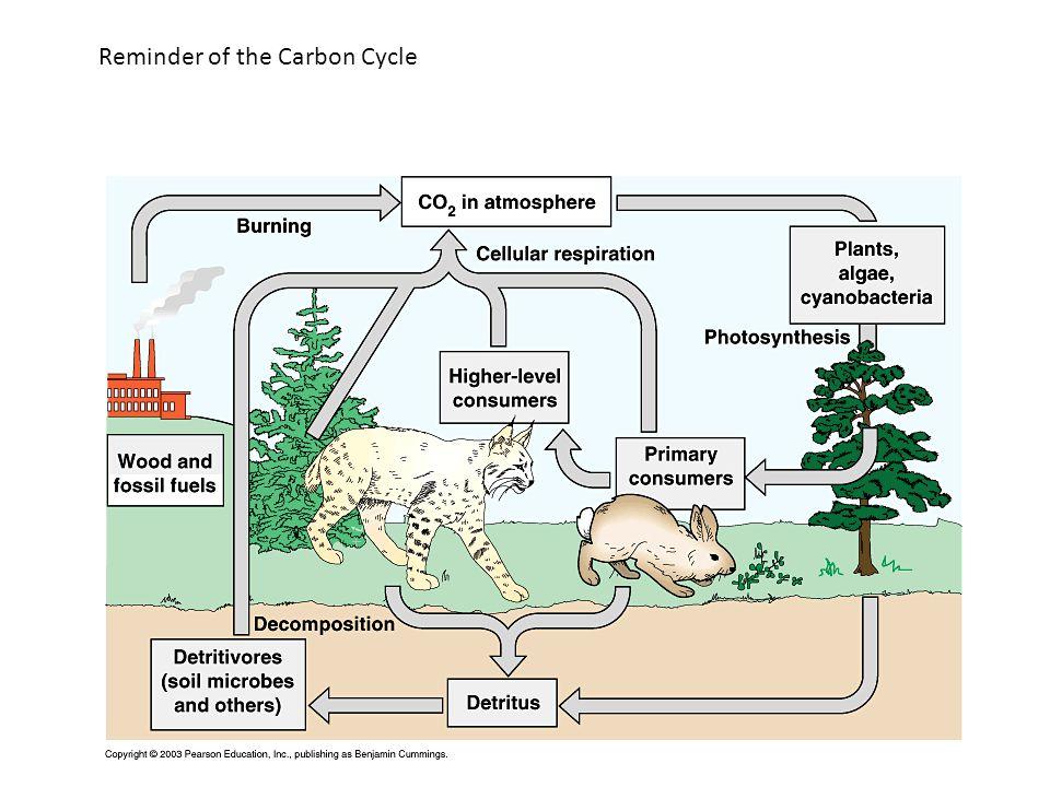 Information sources for phosphate information: http://lpi.oregonstate.edu/infocenter/minerals/ phosphorus/