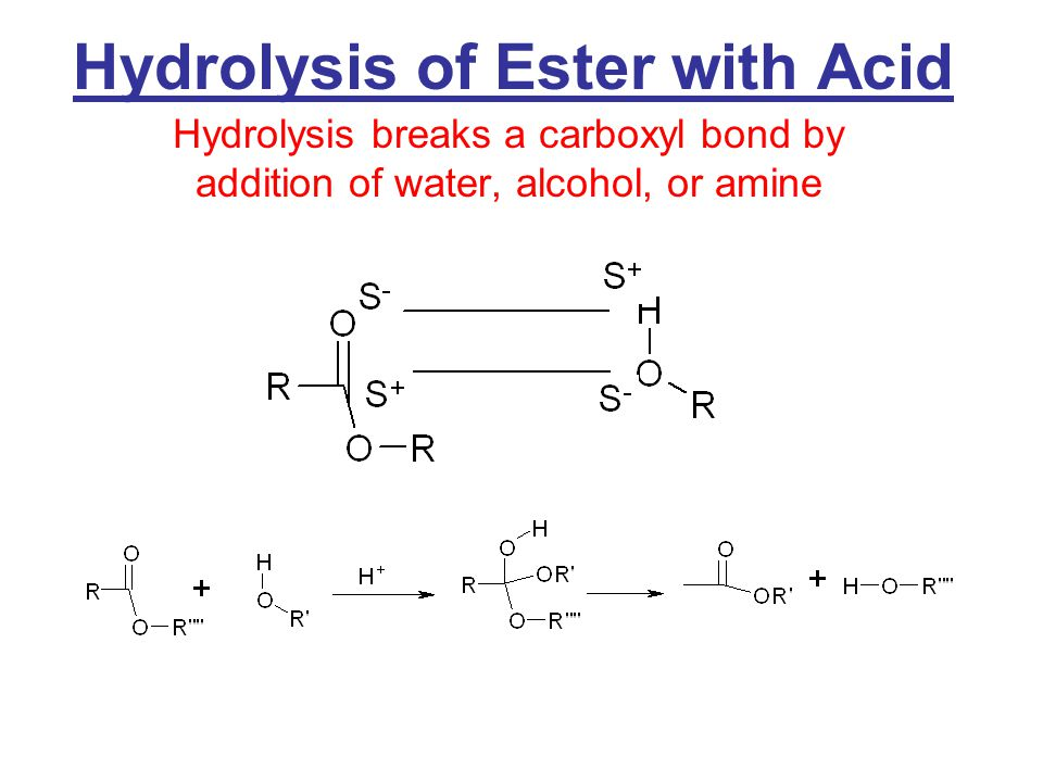 Hydrolysis of Esters Hydrolysis = Reverse of esterification –Acid or base catalyzed –Produces acid and alcohol 1 o alcohol B