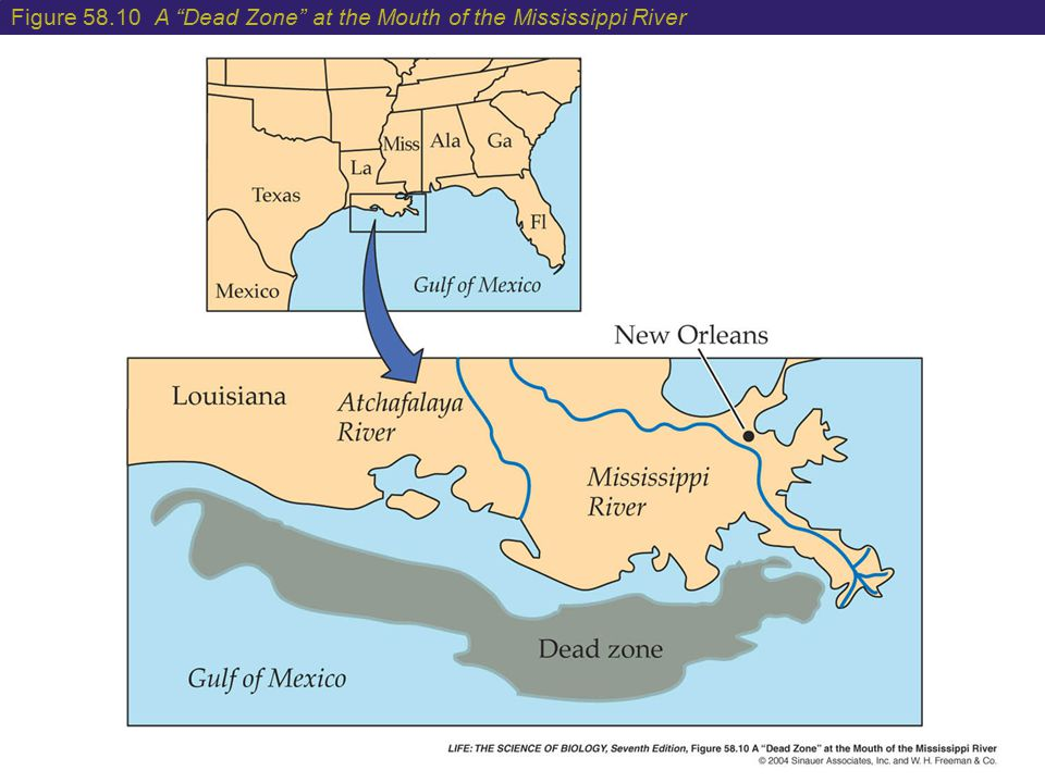 """Figure 58.10 A """"Dead Zone"""" at the Mouth of the Mississippi River"""