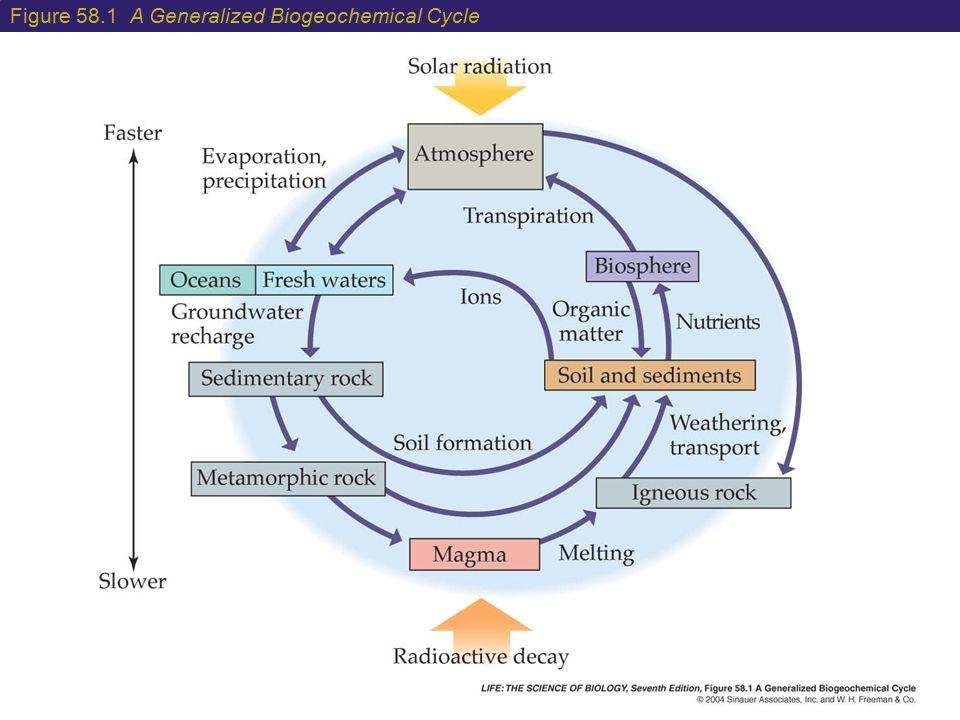 Figure 58.1 A Generalized Biogeochemical Cycle