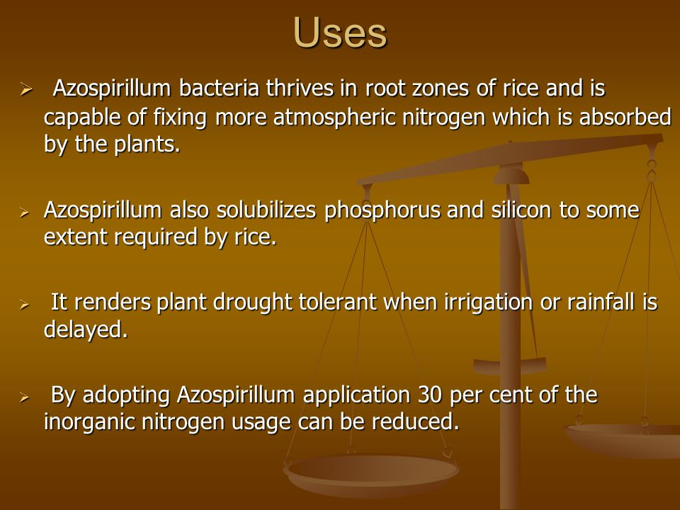 Uses  Azospirillum bacteria thrives in root zones of rice and is capable of fixing more atmospheric nitrogen which is absorbed by the plants.  Azosp