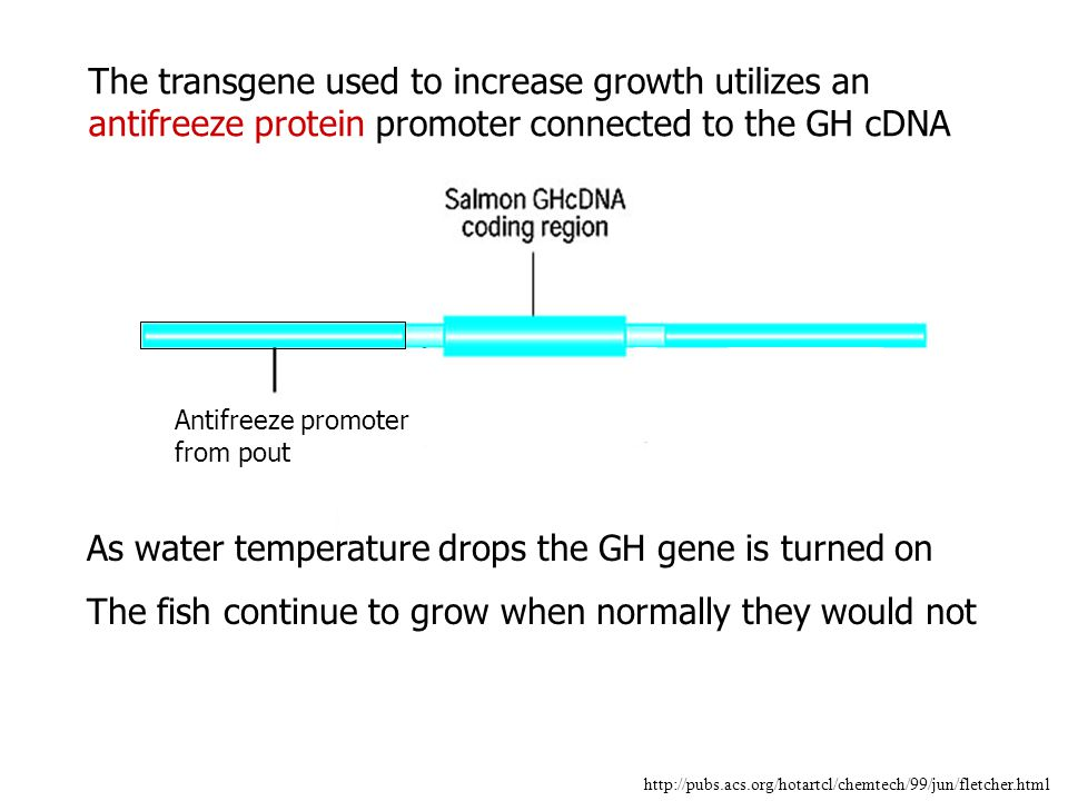 The transgene used to increase growth utilizes an antifreeze protein promoter connected to the GH cDNA http://pubs.acs.org/hotartcl/chemtech/99/jun/fl