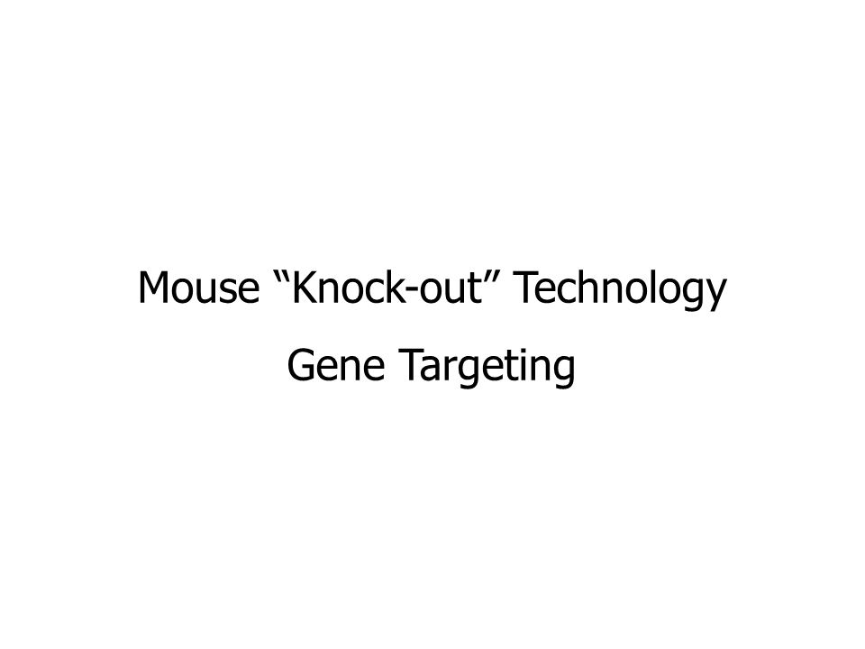 "Mouse ""Knock-out"" Technology Gene Targeting"