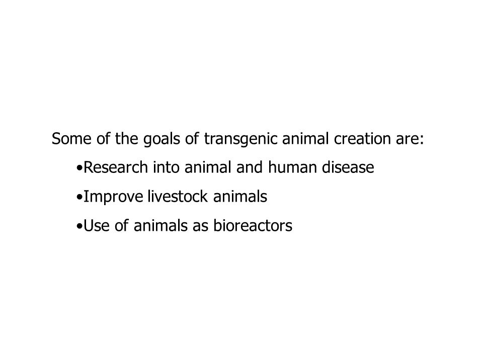 Some of the goals of transgenic animal creation are: Research into animal and human disease Improve livestock animals Use of animals as bioreactors