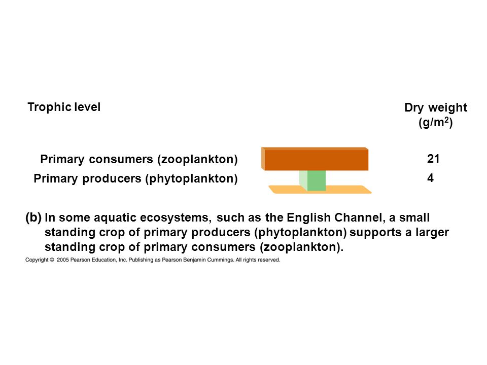 Trophic level Dry weight (g/m 2 ) Primary consumers (zooplankton) Primary producers (phytoplankton) 21 4 In some aquatic ecosystems, such as the English Channel, a small standing crop of primary producers (phytoplankton) supports a larger standing crop of primary consumers (zooplankton).