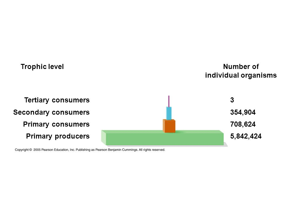 Trophic level Number of individual organisms Tertiary consumers Secondary consumers Primary consumers Primary producers 3 354,904 708,624 5,842,424